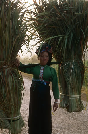 Woman, Northern Vietnam
