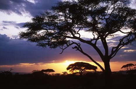 Sunset in the Serengeti, Tanzania